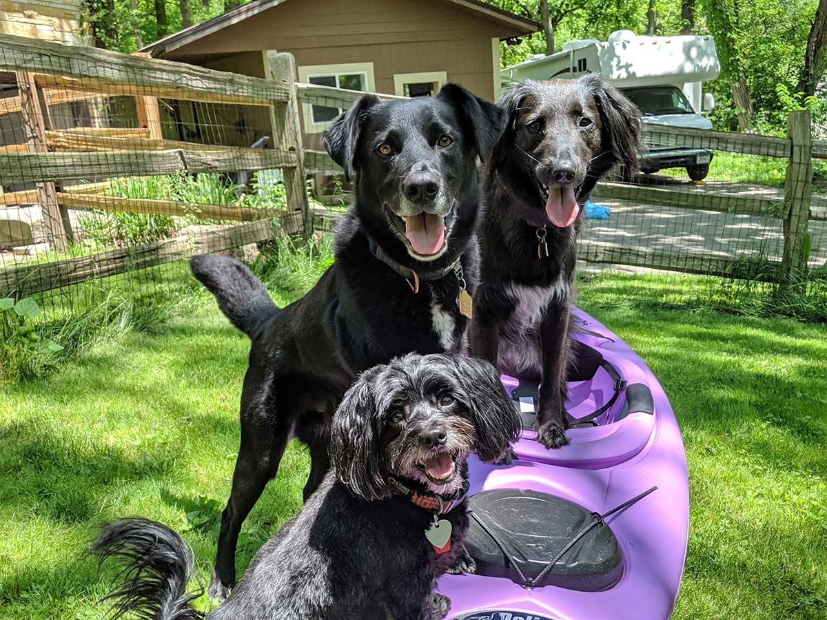 three dogs standing on kayak looking at camera