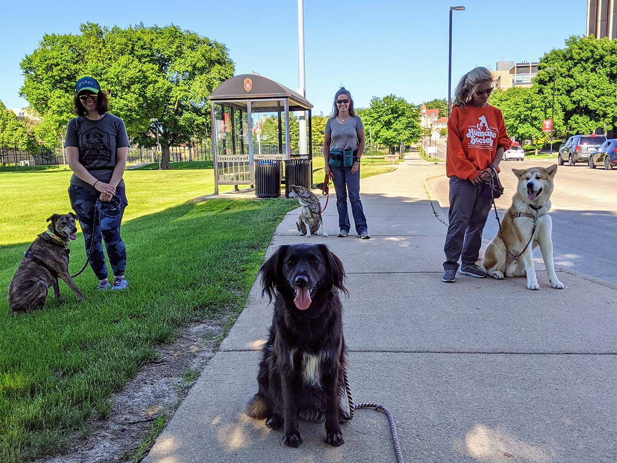 Four Madison dog trainers with dogs on sidewalk