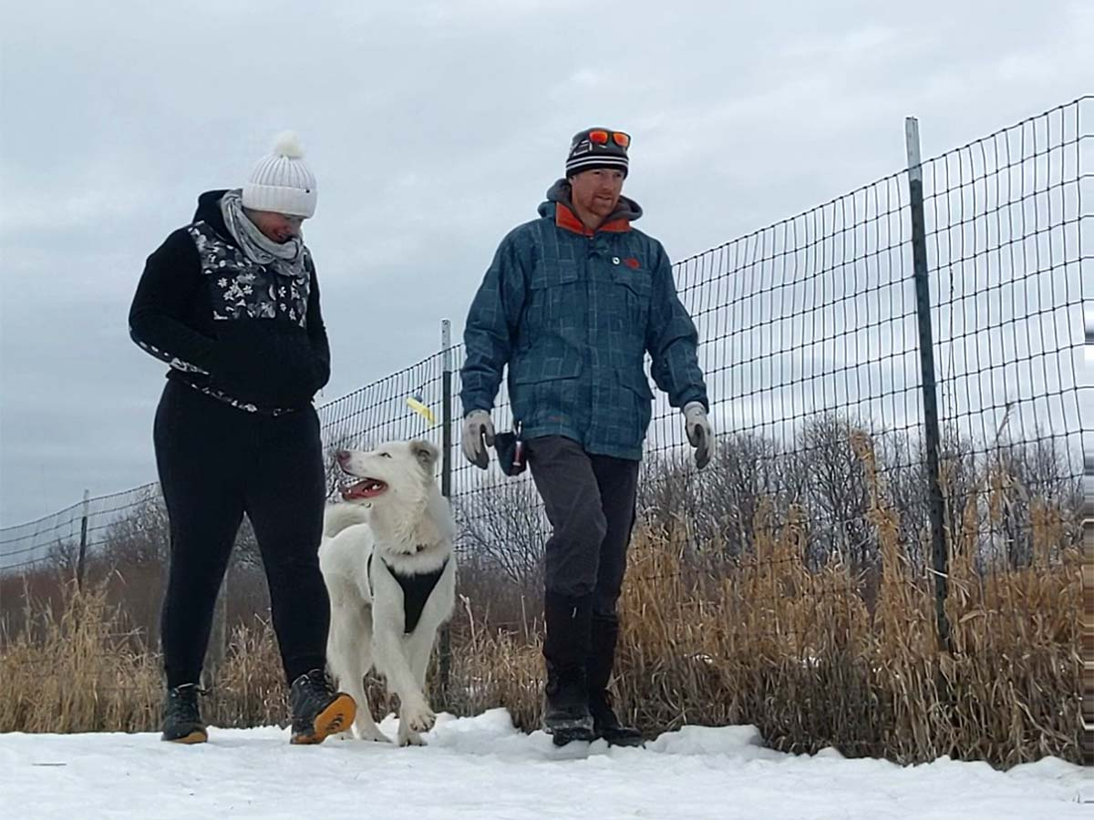 two people with white dog walking along fence line in winter