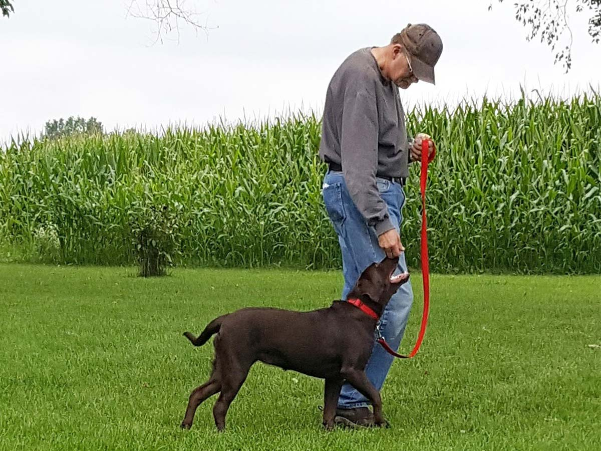 man with dog in front of cornfield